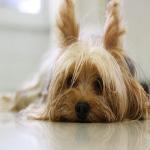 las mascotas mejoran nuestra salud