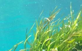 Los batidos de algas aportan nutrientes, vitaminas y minerales