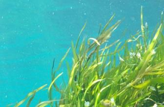 Los batidos de algas tienen un gran valor nutricional