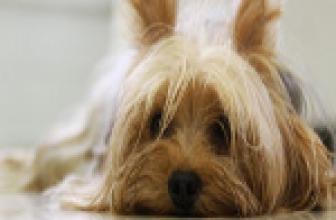 Los animales de compañía mejoran nuestra calidad de vida